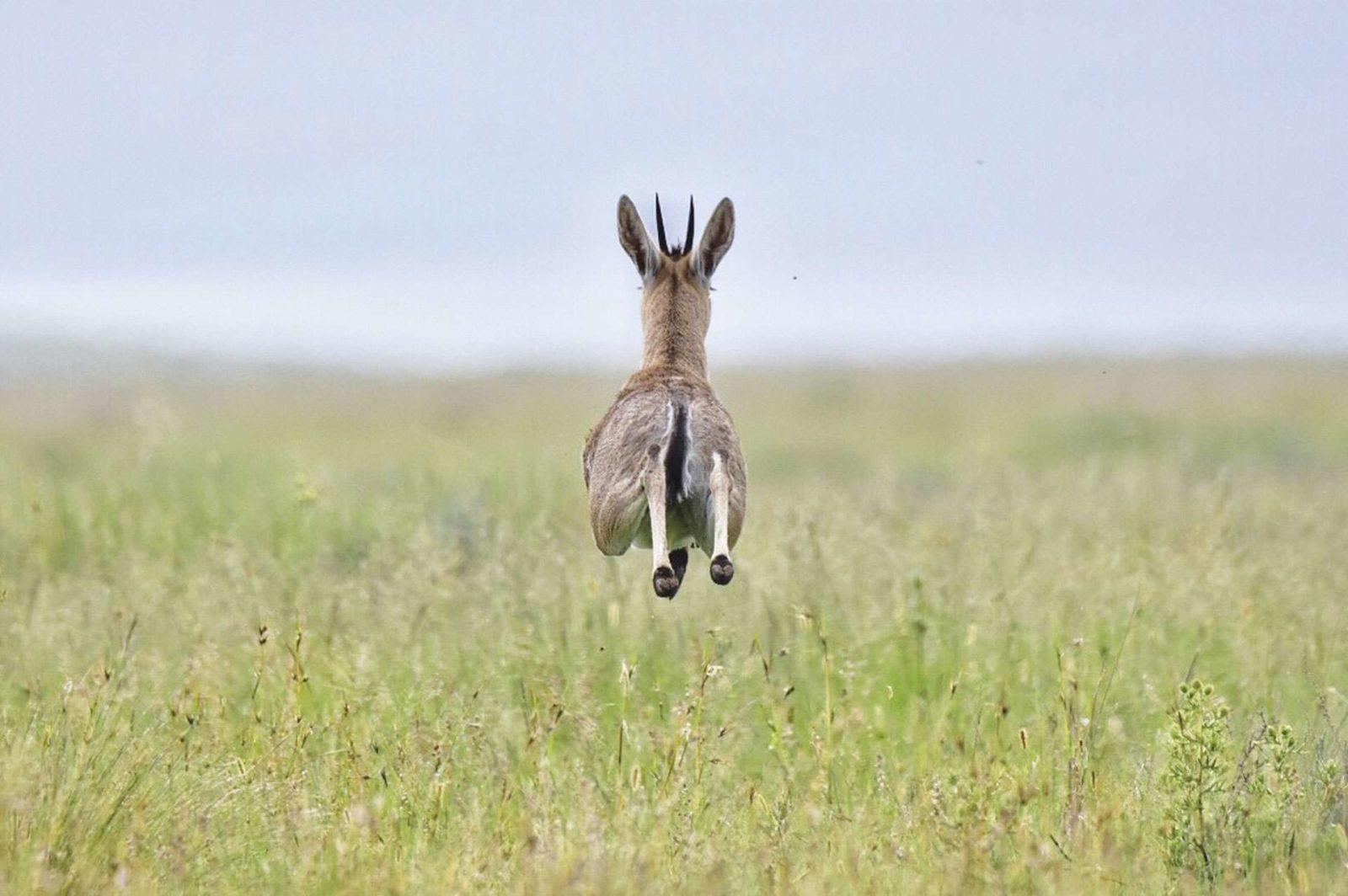 Local wildlife freely wander